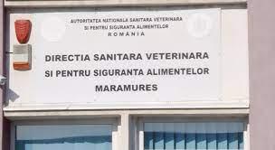 VIDEO   Acțiune de lichidare a focarelor de pestă porcină în județul Maramureș