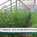 REPORTAJUL ZILEI | Năneștiul, satul în care încă se face agricultură
