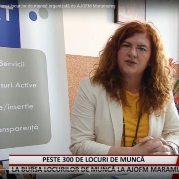 VIDEO   Peste 300 de locuri de muncă la Bursa locurilor de muncă organizată de AJOFM Maramureș