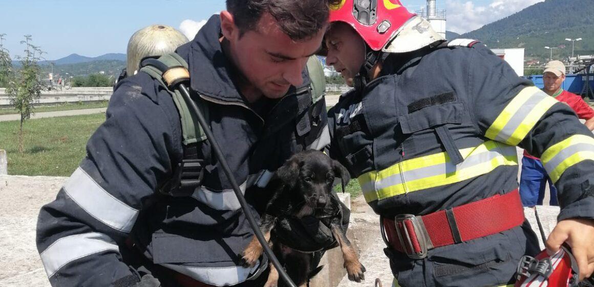 Video | Cățel căzut în canal salvat de pompierii băimăreni